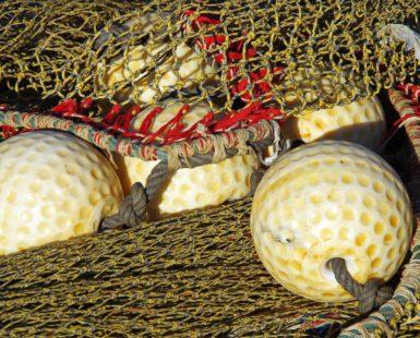 la potencia del pescado y marisco