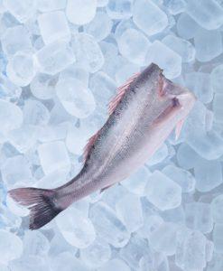 Como Congelar El Pescado Congelado